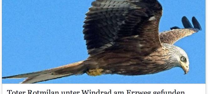 Toter Rotmilan unter Windrad am Erzweg gefunden – Artikel aus der Saarbrücker Zeitung vom 12.05.2017