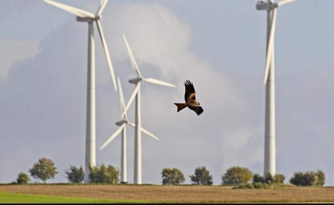 Neue Windkraftwerkspläne in der Gemeinde Mandelbachtal?